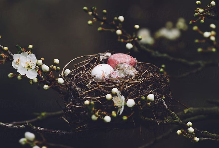 Nest for Floral Tree